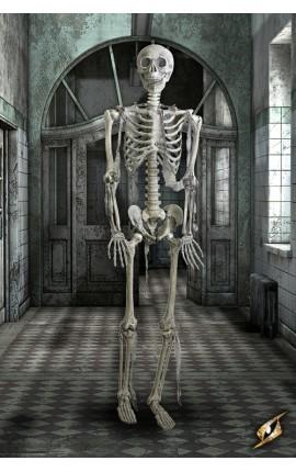 Ludzki szkielet - naturalny rozmiar.